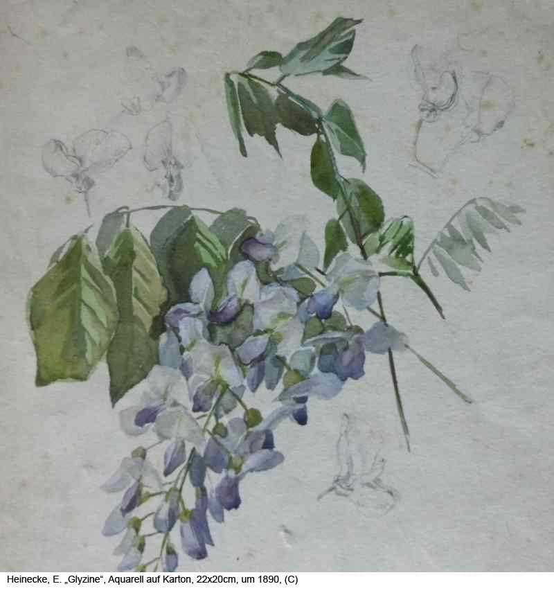 Heinecke-E.-Glyzine-Aquarell-auf-Karton-22x20cm-um-1890-1