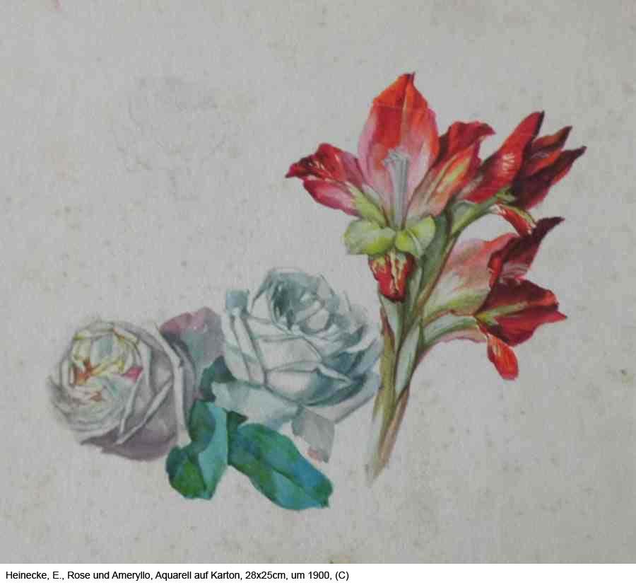 Heinecke-E.-Rose-und-Ameryllos-Aquarell-auf-Karton-28x25cm-um-1900-1